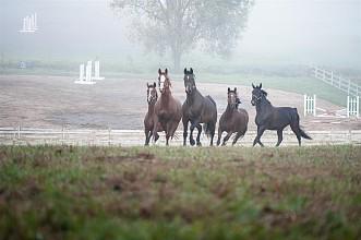 3-konie-akademia-kuraszkow.jpg