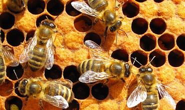 akademia-pszczoly-kuraszkow-1.jpg