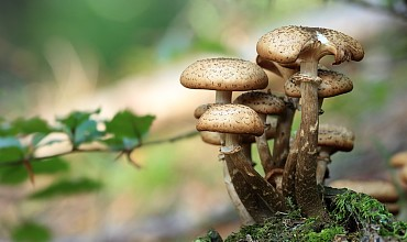 mushrooms-548360_960_720.jpg